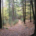 Horatio Colony Nature Preserve