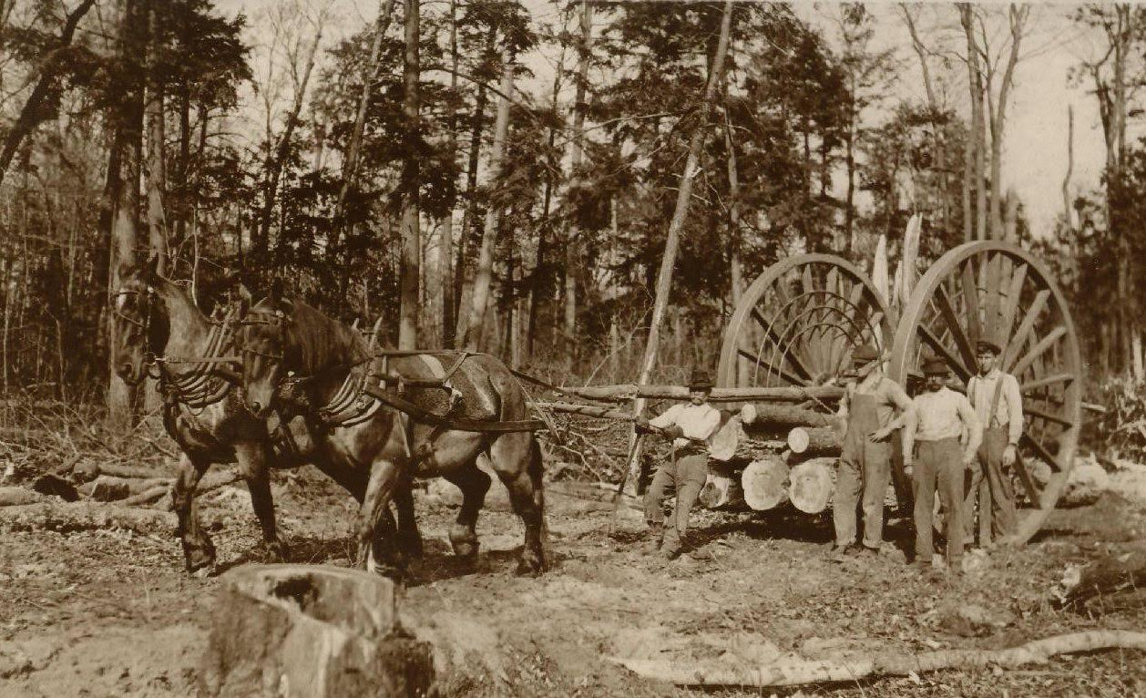 History Of Logging In New Hampshire At The Monadnock